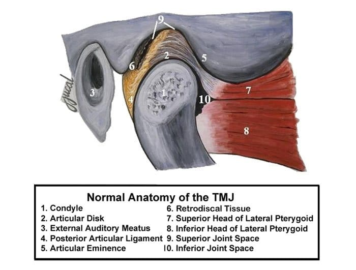 The Jaw joint showing the normal anatomy of TMJ
